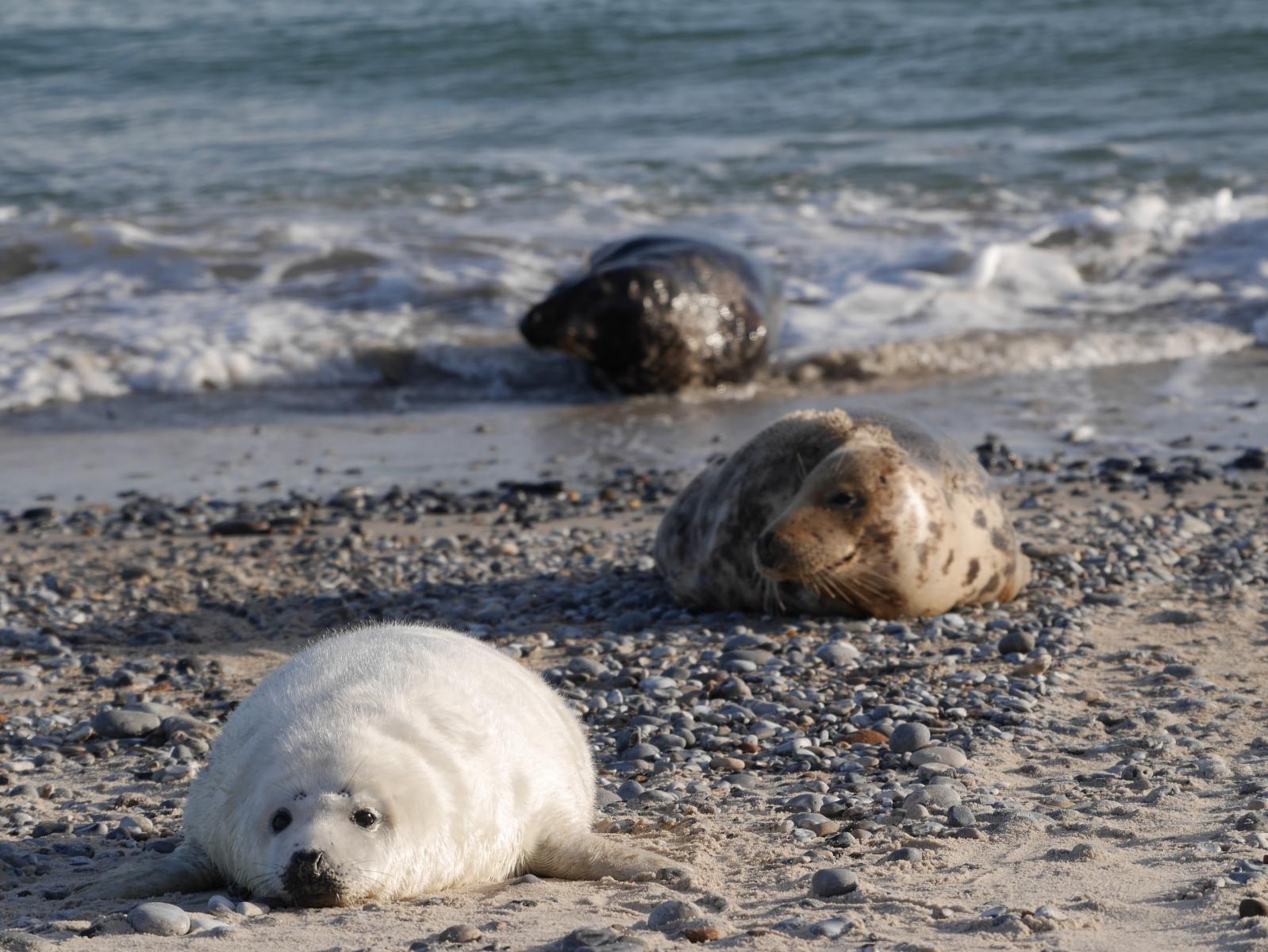 Eine Robbenfamilie