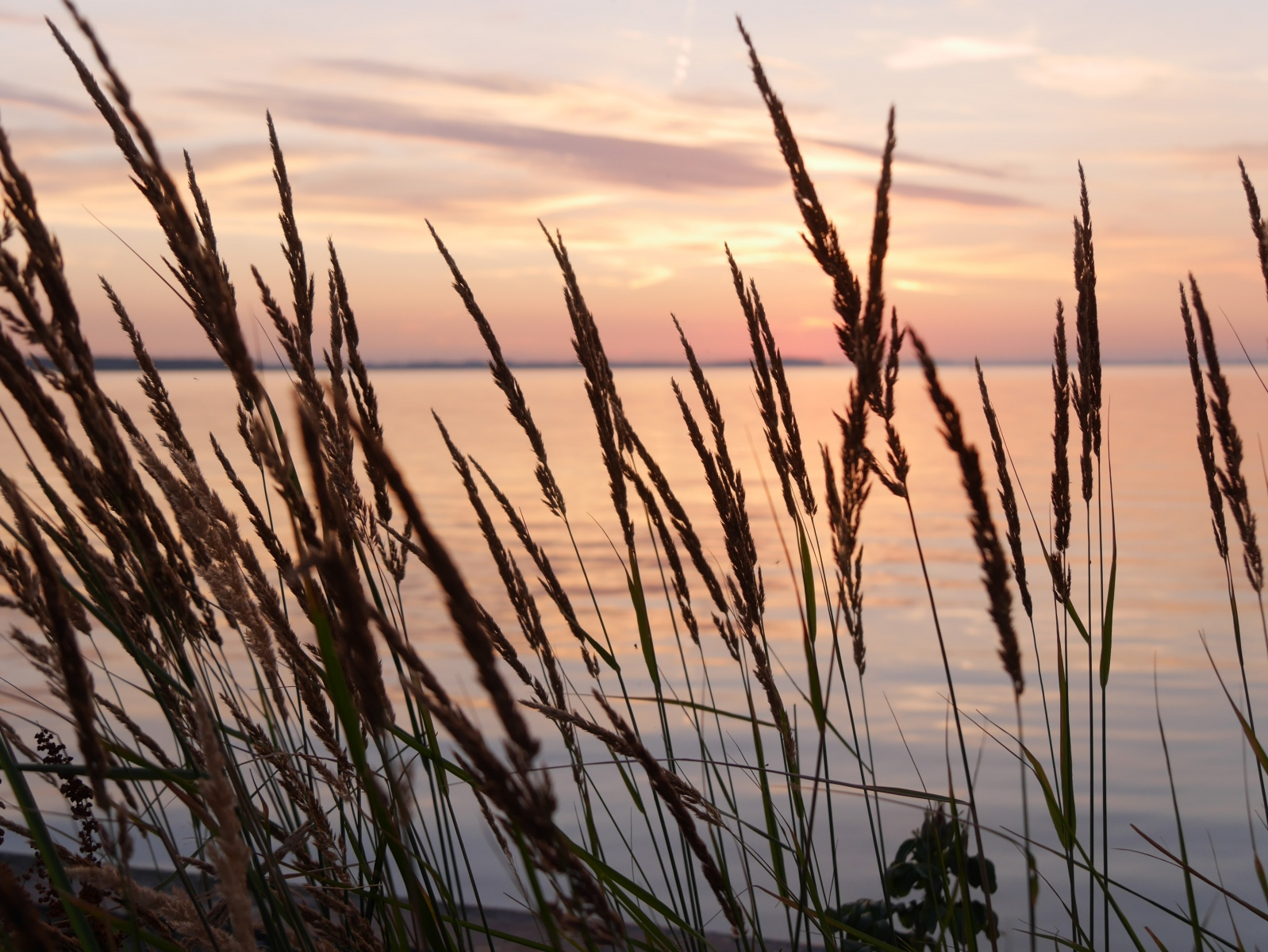 Am Ufer von Rankwitz mit Blick auf das Achterwasser