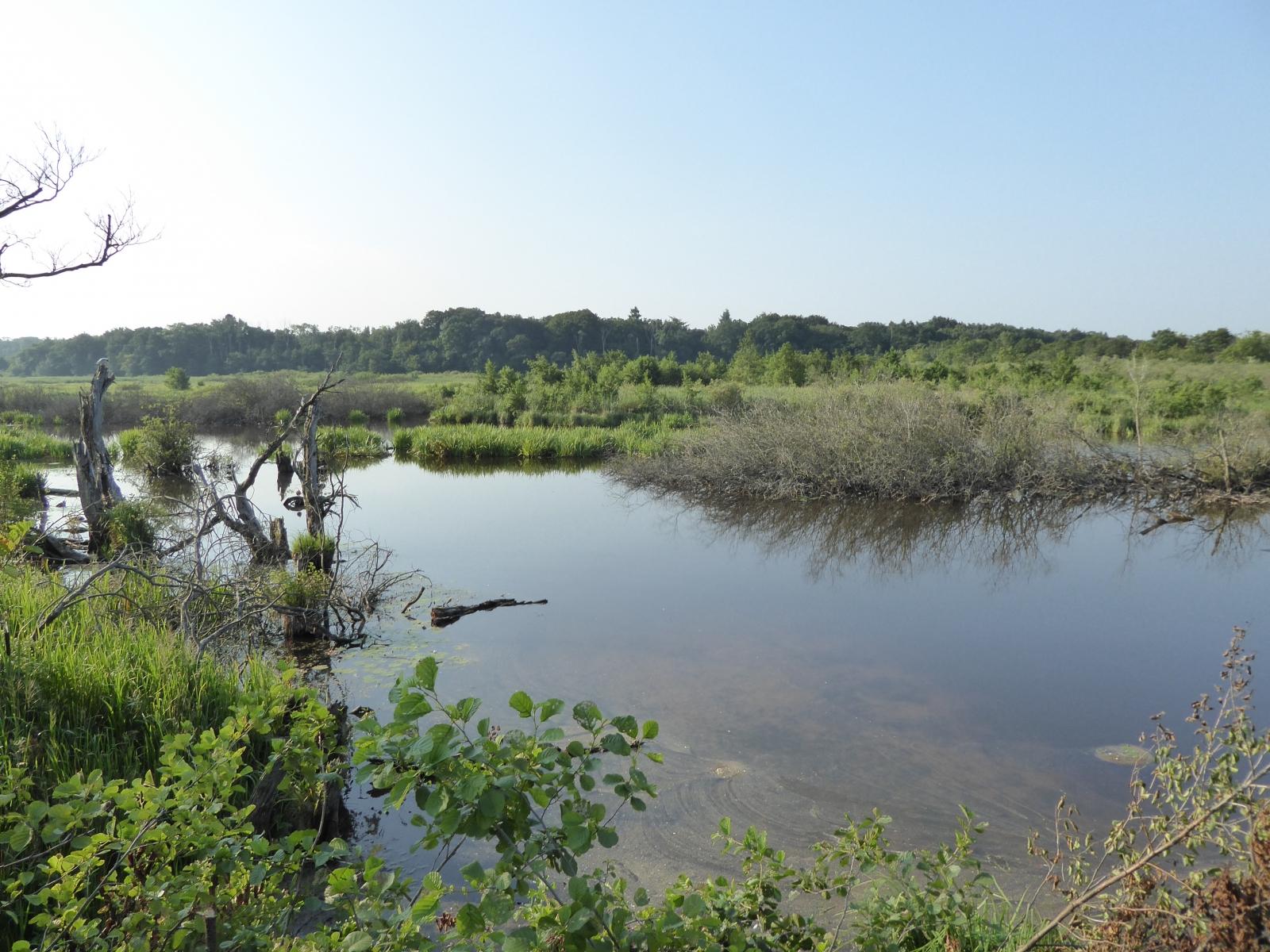 Links und rechts des Weges gibt es immer mal wieder Brackwasserseen