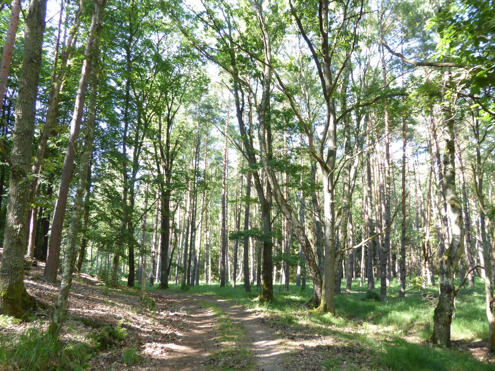 Zwischendurch gibt es auch immer wieder Abschnitte, die durch den Wald führen. Das war gerade bei den sommerlichen Temperaturen sehr angenehm.