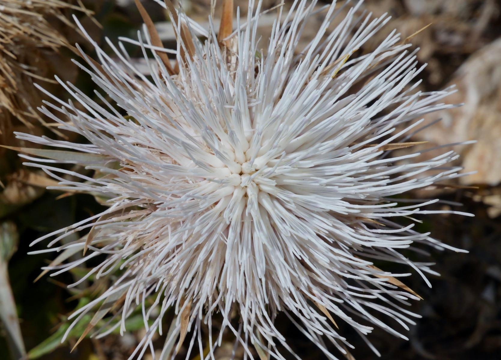 Einfache Blüten - zauberhafte Wirkung