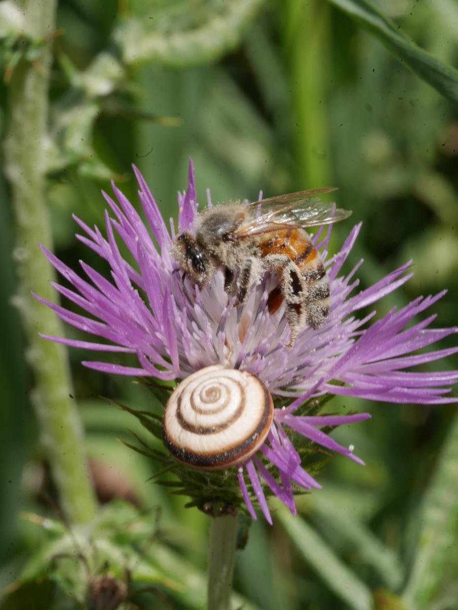 Insekten Stillleben