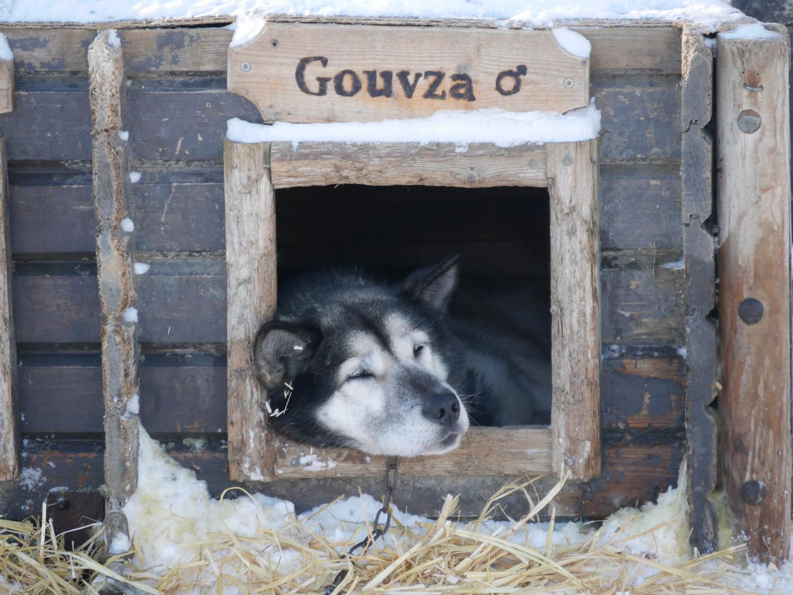 Jedem Hund seine Hütte...