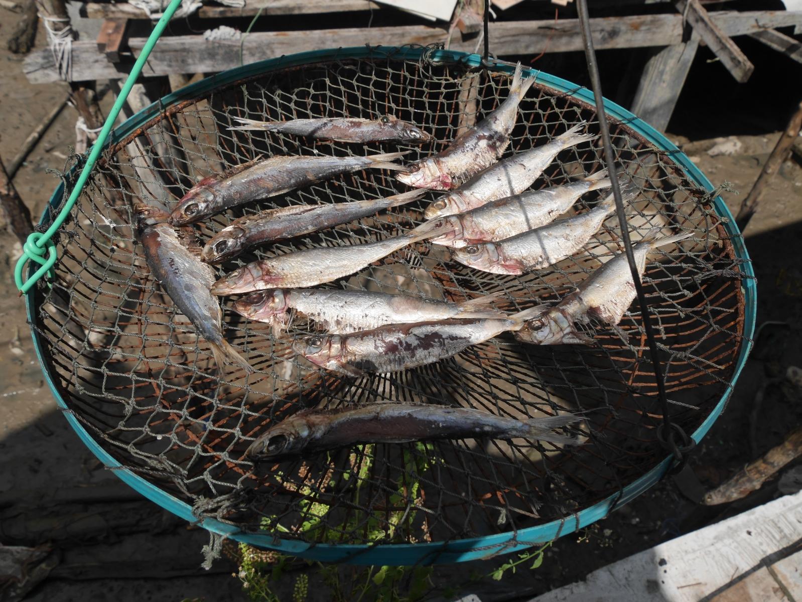 Diese Fische liegen zum Trocknen aus